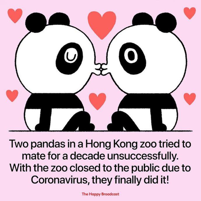Illustration Mauro Gatti sur les Pandas de Hong Kong