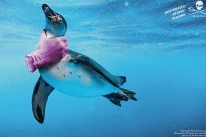 Cette campagne publicitaire met en garde contre les dangers des gants en latex pour les animaux marins