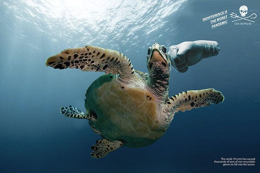 camapgne publicitaire Sea Shepherd