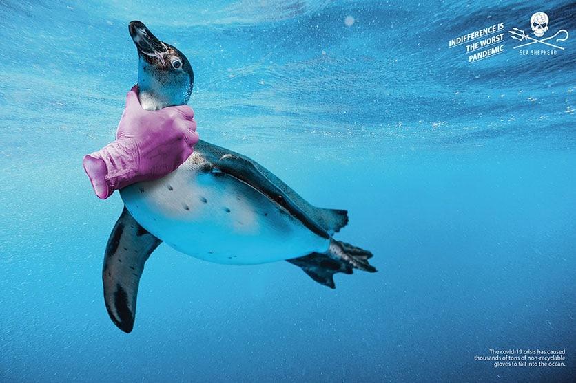 campagne de communication Sea Shepherd