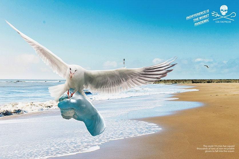 campagne d'affichage Sea Shepherd 03