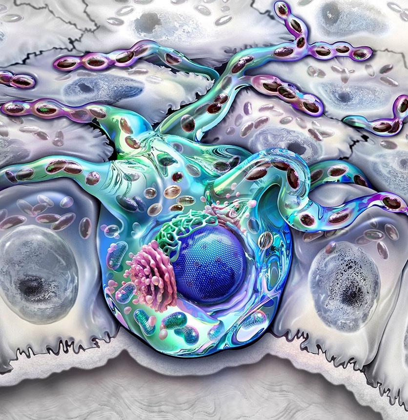 illustration de Audra Geras